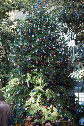 Botanical Garden Christmas tree